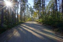 路的看法在秋天森林里 免版税库存照片