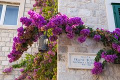 路的美丽的克罗地亚车号牌有九重葛花的在分裂,克罗地亚 库存照片