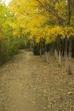 路的美好的风景 免版税库存照片