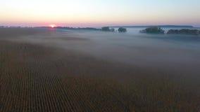 路的美好的鸟瞰图有驾驶的汽车,早晨领域用雾包括在日出 乌克兰 股票视频