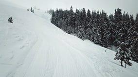 路的鸟瞰图有积雪的杉木的分支 股票视频
