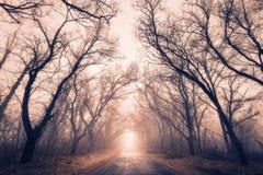 路穿过有雾的一个神奇秋天森林 免版税库存图片