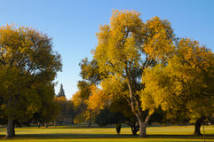 路线榆木秋天高尔夫球结构树 免版税库存照片