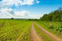 路线用在领域的绿色麦子在与云彩的天空下 免版税图库摄影