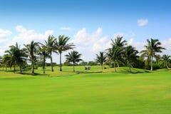 路线高尔夫球墨西哥热带的棕榈树 免版税图库摄影
