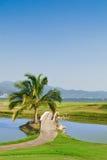 路线高尔夫球热带的棕榈树 库存照片