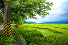 路线193台湾稻田 免版税库存图片