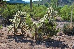 路线66沙漠仙人掌菲尼斯亚利桑那绵延山 库存图片