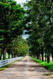 路结构树。 库存图片