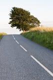 路结构树 库存照片