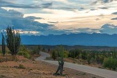 路绕通过沙漠 库存照片