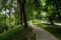 路边长凳在遮荫森林在晴朗的夏日 免版税库存图片