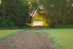 路通过一个小组树 免版税库存照片