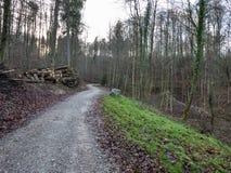 路通过一个森林在秋天 免版税图库摄影