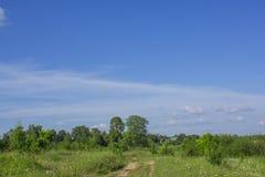 路通过一个绿色草甸 免版税库存照片