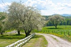 路通过一个老果树园在春天 库存照片