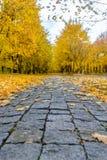 路通过五颜六色的黄色秋天森林地 免版税图库摄影