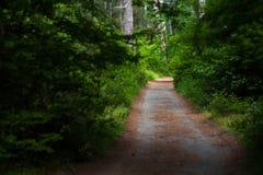 路通过冷杉森林 免版税库存图片