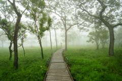 路通过在早晨雾的绿色树 库存图片