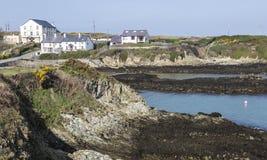 路通过在Anglesey,威尔士,英国的洋玉兰 免版税库存照片