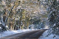 路通过多雪的森林 免版税库存照片