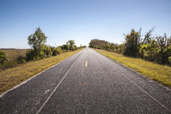 路通过大沼泽地国家公园 免版税库存图片