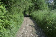 路通过山的一个森林 库存照片