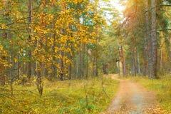 路通过日出的美丽的秋天森林 免版税库存图片