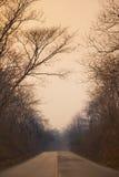 路通过日落的森林 免版税库存图片