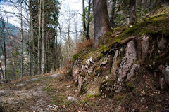 路通过春天森林 免版税库存图片