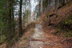路通过春天森林 库存照片