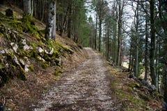 路通过春天森林 免版税图库摄影