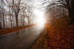 路通过有薄雾的森林 图库摄影