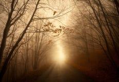路通过有薄雾的森林 库存照片
