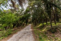 路通过树在森林里 免版税库存照片
