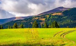路通过树木丛生的小山的象草的草甸 免版税库存图片