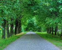路通过树 免版税库存照片