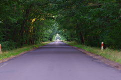 路通过森林。 免版税库存图片