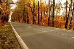 路通过森林。 库存照片
