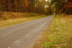 路通过森林。 库存图片