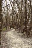 路通过森林在一秋天天 免版税库存照片
