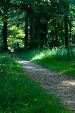 路通过森林地 免版税库存照片