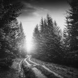 路通过森林黑白照片 库存照片