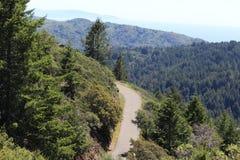 路通过森林 免版税图库摄影