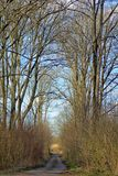 路通过森林 库存照片