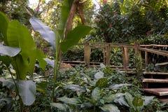 路通过热带密林 免版税图库摄影