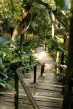 路通过热带密林 免版税库存照片