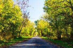 路通过秋天森林。 免版税库存照片