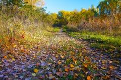 路通过秋天森林 免版税库存图片