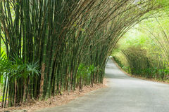 路通过竹子隧道  免版税图库摄影